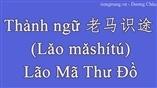 Thành ngữ 老马识途 (Lǎo mǎshítú) – Lão Mã Thư Đồ bằng tiếng trung